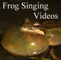 Frog Calling Video Button