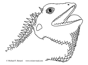 Lizard Head line drawing for coloring page