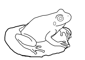 pacific chorus frog line drawing for coloring page