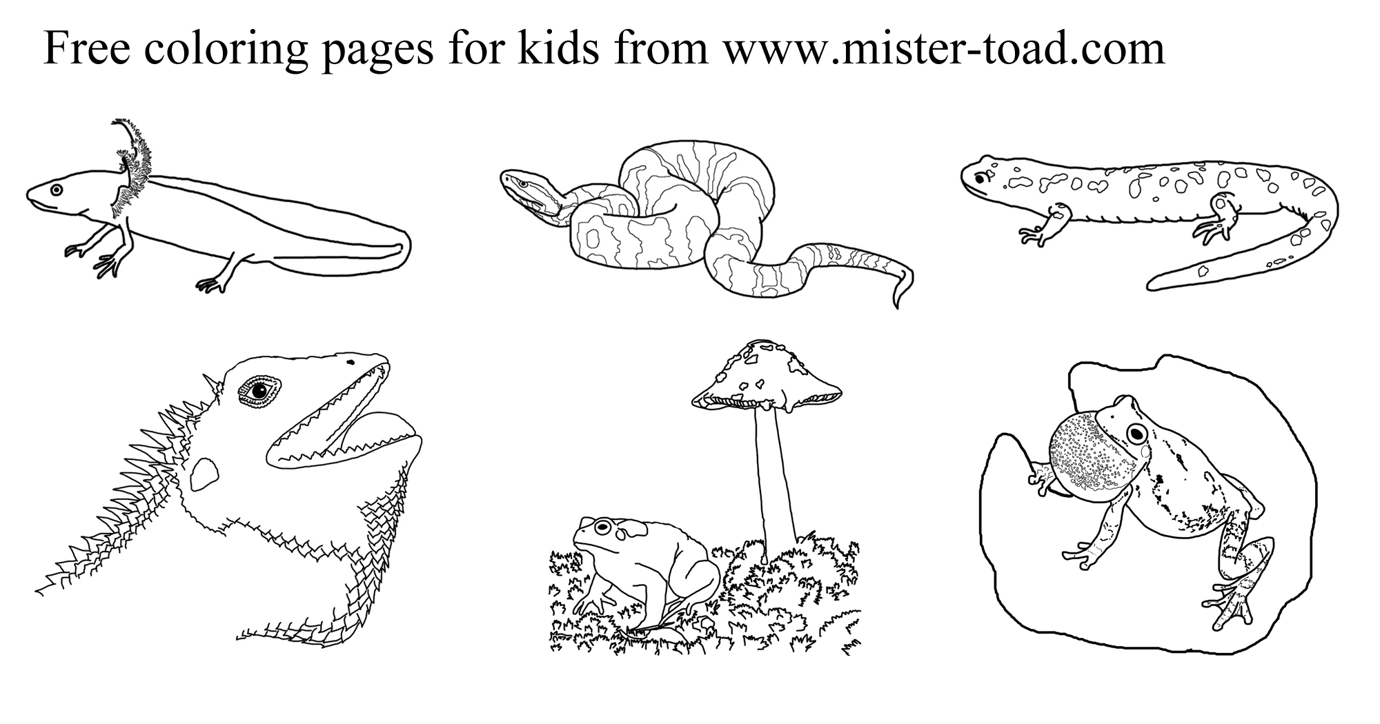Reptiles And Hibians Coloring Pages