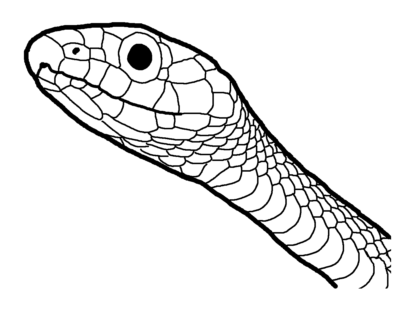 coloring pages cotton mouth snake - photo#33