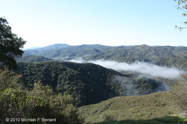 Fog filling valley in Napa County, California