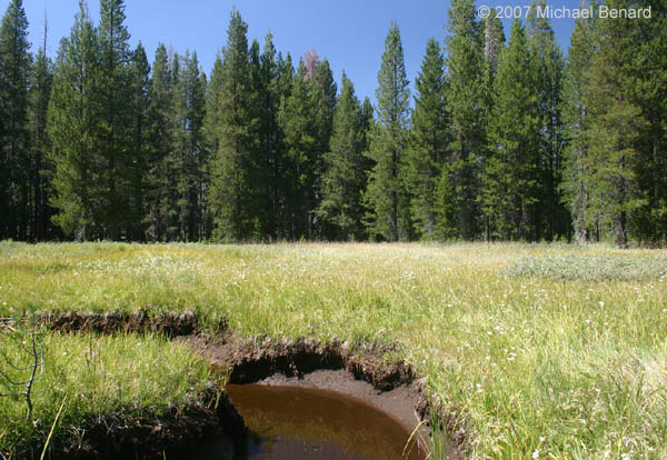 Yosemite vernal pool